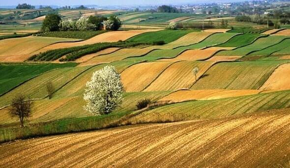 Tarımsal Üretim ve Hayvancılıkta Projeler Dönemi