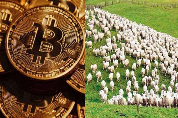 300 baş koyun yerine bitkoyun vereydiler