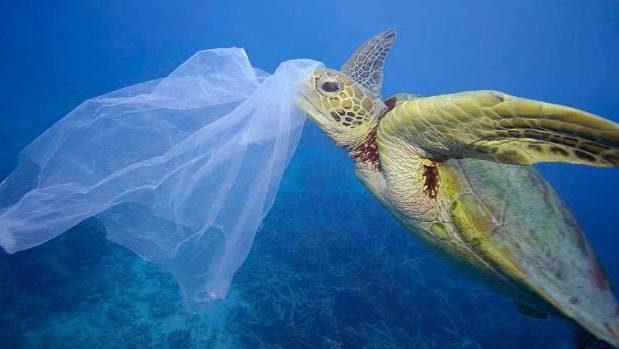 Plastik poşetler mi daha zararlı yoksa kumaş alışveriş çantaları mı?
