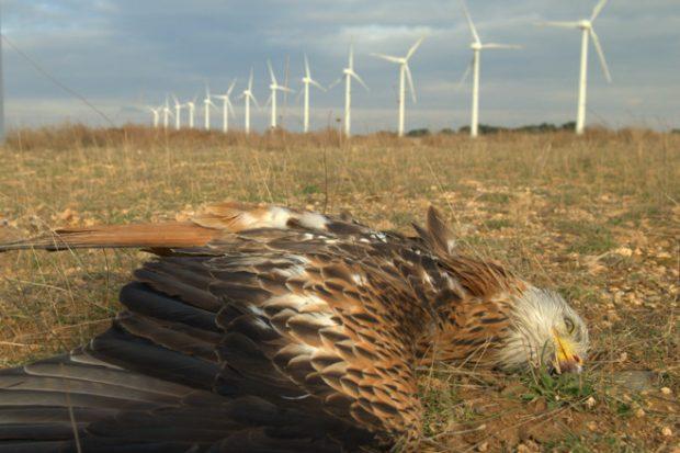 Rüzgar ve güneş enerjileri ne kadar çevre dostu?